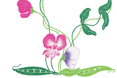Seedlings illustration by Malin Rosenqvist