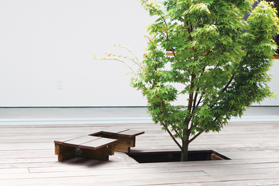 ipe deck with japanese maple tree