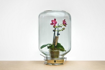 PikaPlant Jar for indoor gardening