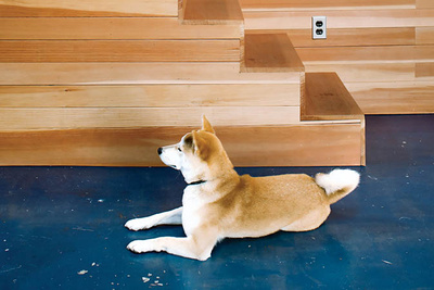 benoit residence wooden stairs dog