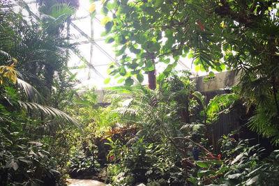 The Bloedel Conservatory in Vancouver's Queen Elizabeth Park.