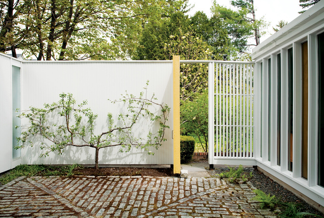 """Isaacson """"borrows the view"""" of a neighbor's magnolia on the adjacent property by propping open the side door. His own espaliered apple tree makes the most of limited space."""
