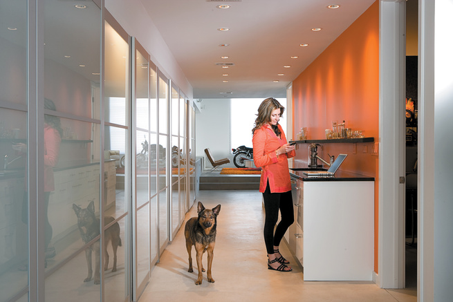 Tereasa Surratt and Jack, a friend's German shepherd mix, hang out in the kitchen, where appliances are hidden behind aluminum-and-frosted-glass wardrobes from Ikea.