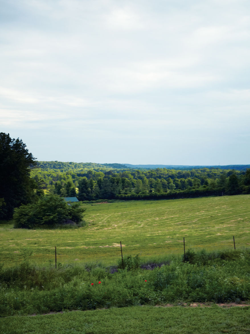 Outdoor pasture view