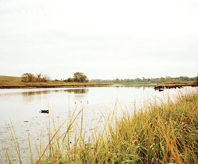 Freshkills marsh in Staten Island