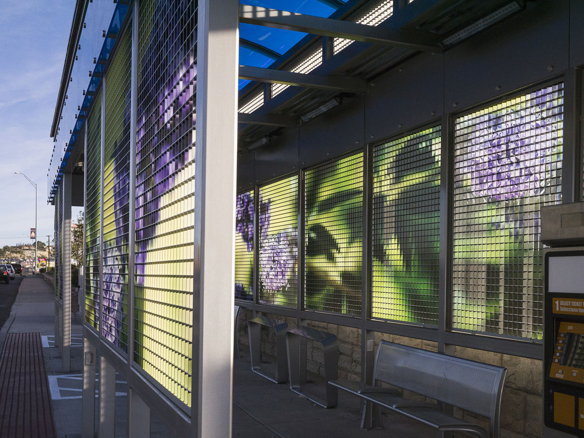 Leaves of Wind 2014 virtual garden in El Paso, Texas by artist Catherine Widgery and collaborating photographer Patrick Walker