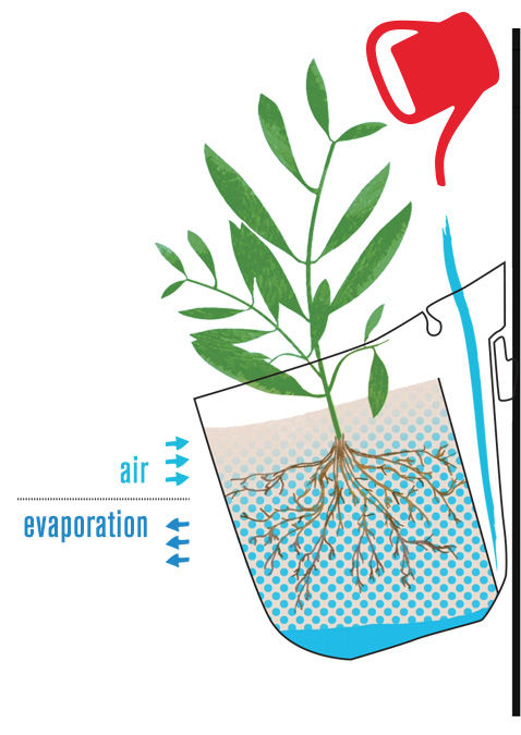Woolly Pocket self-watering infographic