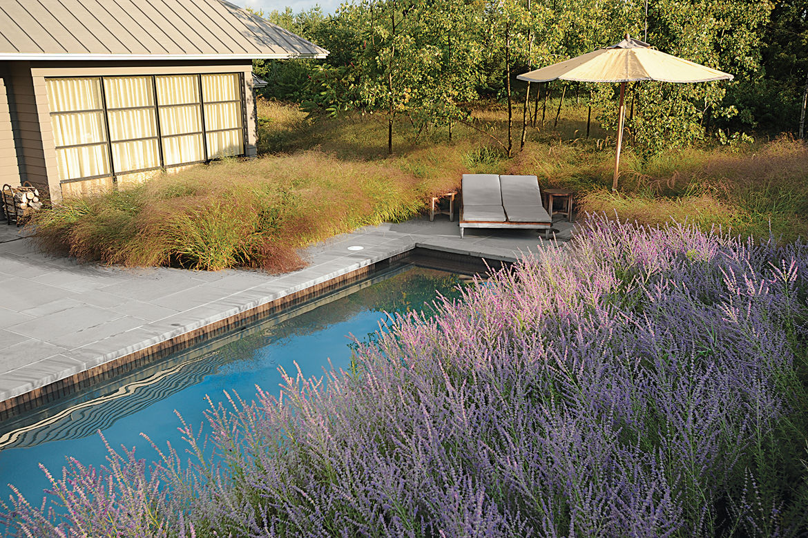 modern landscaping garden midwest russian sage recreation space pool