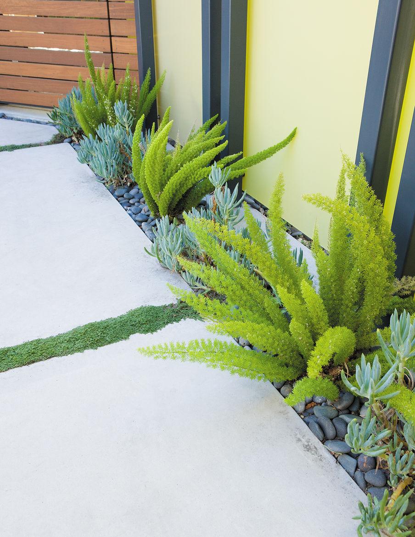 modern backyard garden grass plants concrete pavers