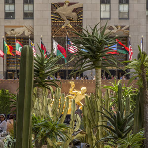 Rockefeller Center filled with cactus during the month of June.