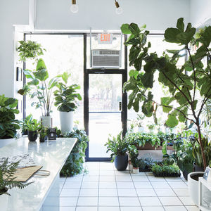 design finder the sill new york city plant shop gardening inside