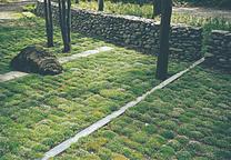 101 landscape supplant your lawn 2