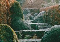 101 landscape well pruned 2